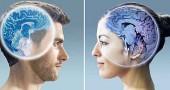 Кто умнее мужчина или женщина?