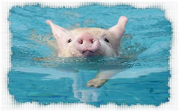 Плавание для похудения.